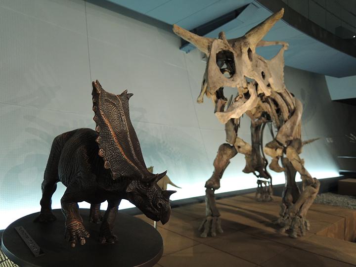恐竜の骨と模型のセット展示
