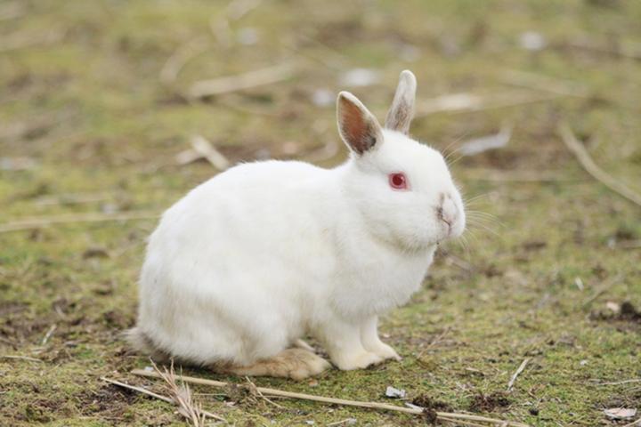 兔、兔、何見て跳ねる